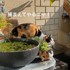 多肉植物寄せ植え/多肉植物のある暮らし/多肉植物/猫好き/猫 今朝は良いお天気☀️ ニャンコは ベラン…