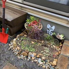 シーグラス/多肉植物/多肉植物寄せ植え/花壇作り/花壇DIY 今日は 小さな花壇作り! 先ずは ser…