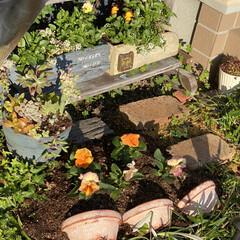 パンジー/花壇/多肉植物の寄せ植え/多肉/多肉植物 昨日植えた パンジー💕  花壇の中に少し…(2枚目)