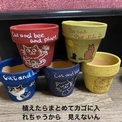 花壇/猫/リメ鉢/リメイク鉢 もうすぐ到着のリエール苗のため 塗りまく…(3枚目)