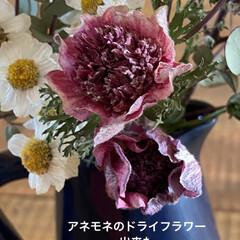 花/ドライフラワー 色んな花をドライフラワーにしてみたい今日…(1枚目)