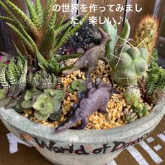 多肉植物/多肉/多肉植物寄せ植え/カエル/サンセベリア/ハオルチア/... いい季節になりましたねぇ😃  とってもい…(5枚目)