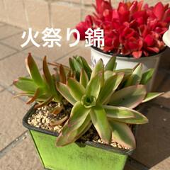 多肉/多肉植物/ダイソー/100均/竹細工/リメイク鉢 今日は息子ちゃんの卒業式でした🌸  なの…(4枚目)