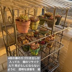 多肉植物/多肉/多肉植物の寄せ植え/リメ缶/リメ缶バッグ 蘭くんのおうちさんが 作ってた バスロマ…(7枚目)