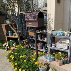 多肉植物/ガーデン/花壇 今日も良い天気☀️ うちの玄関横、花が🌼…