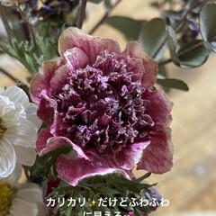 花/ドライフラワー 色んな花をドライフラワーにしてみたい今日…(2枚目)