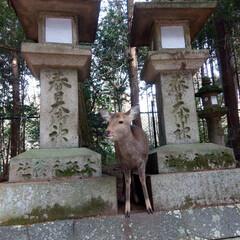 奈良公園/はじめてフォト投稿 奈良公園 #はじめてフォト投稿