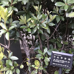 はじめてフォト投稿/風景 公園の木