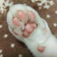 肉球/肉球がやっぱりピンク/はじめてフォト投稿/にゃんこ同好会/猫派 ピンクの肉球LOVE♡