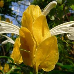 お花/黄色/植物園/はじめてフォト投稿 植物園の花。