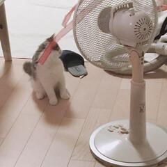 夏模様 扇風機面白い!