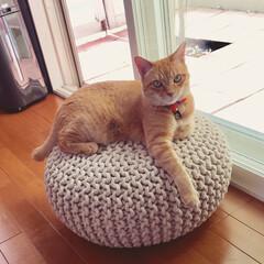 猫 我が家のアイドルです