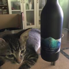 猫派/にゃんこ同好会 日本酒「氷室」を守るワサビ君