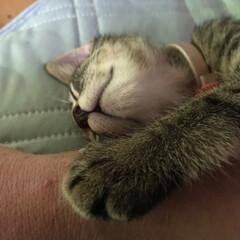 猫派/にゃんこ同好会 いつも齧ったり噛んだりするオイラの手首わ…