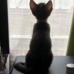 猫派 魔女の宅急便のJIJIみたいでしょ。