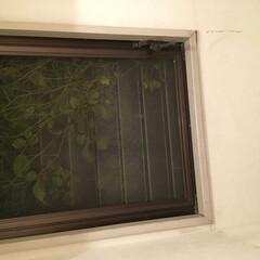 掃除グッズ トイレの窓に網戸をするだけで外の視線を気…