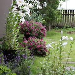 #はじめてフォト投稿/はじめてフォト投稿  庭を花で飾ってみることに挑戦しました。…