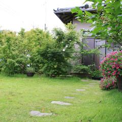 「私の家のここが好き」♪/ここが好き 庭です。花も咲かせています。(1枚目)