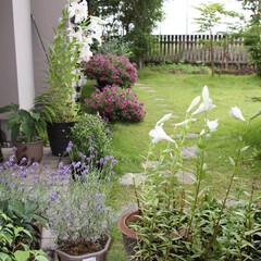 「私の家のここが好き」♪/ここが好き 花と庭