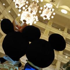 はじめてフォト投稿 ディズニーランドホテルで、ご飯待ち!(1枚目)