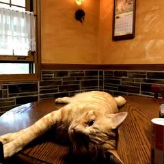 「#我が家の照明」/ネコと住む家/ネコ/LIMIA/長野県/茅野市/... 我が家に遊びに来る通い猫と壁付け照明器具…