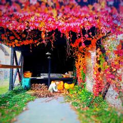 #朱色/「朱色」/長野県/茅野市/工務店/エルハウス/... 蔦に囲まれたガレージです、 作物の整理を…