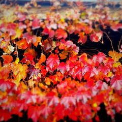 工務店/茅野市/紅葉/エルハウス/エルハウスneco/猫と住む家/... 信州原村の秋は早いです、昨年の画像ですが…