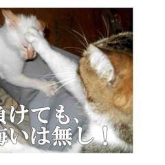 長野県/茅野市/エルハウス/猫と暮らす/猫と暮らす家/フォトde大喜利/... 第三話  赤信号で拾った、わんぱく盛りの…