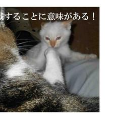 長野県/茅野市/子猫/わんぱく子猫/エルハウス/工務店/... 第一話  赤信号待ちで拾った子猫、 わん…