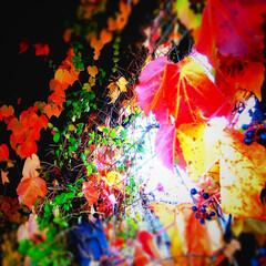 「朱色」/LIMIA/長野県/茅野市/工務店/エルハウス/... 紅葉した蔦が絡むガレージ! 内側から外を…