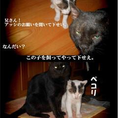 黒猫/クロネコ/猫と暮らす/長野県/茅野市/エルハウス/... 元野良ネコの、心優しい漢の黒ちゃん、 不…