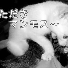 長野県/茅野市/工務店/エルハウス/猫と暮らす家/猫の家/... その4話  赤信号待ちの時、植木の中でに…
