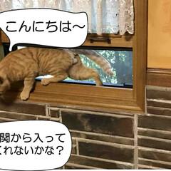 地域猫/猫と暮らす家/茅野市/工務店/エルハウス/エルハウスneco事業部/... 我が家に居ついた地域猫、 フレンドリーで…