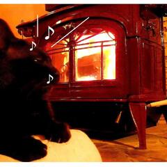 LIMIA/朱色/「朱色」/薪ストーブ/薪ストーブ猫/黒猫/... 薪ストーブと、膝の上でご機嫌な黒猫クロち…