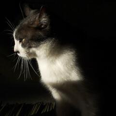 地域猫/白黒猫/エルハウス/茅野市/LIMIA/エルハウスneco事業部/... 我が家の雄猫が連れてきた、メス地域猫です…