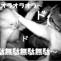 長野県/茅野市/エルハウス/わんぱく子猫/子猫/工務店/... 第二話  赤信号で拾った子猫、わんぱく盛…