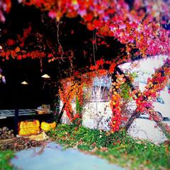 朱色/「朱色」/LIMIA/長野県/茅野市/工務店/... 秋の紅葉、蔦に包まれたアニメの世界に出て…