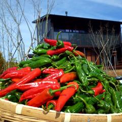 #朱色/「朱色」/長野県/茅野市/工務店/エルハウス/... 会社のモデルハウスにある家庭菜園で採れた…