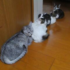 家族/猫クラブ 寒くなって、ヒーターの前に謎の行列を作っ…