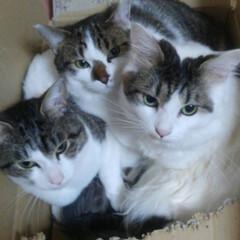 やんちゃboys/兄弟/猫クラブ 今日も、明日も、明後日も、僕らは元気に仲…