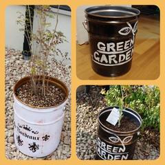 ガーデニング雑貨/リメイク/ペール缶/DIY 植木鉢って大きいものだと重くて、値段も上…