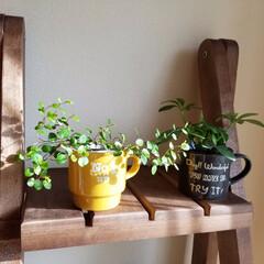 マグカップ/100均/植物/ウッド