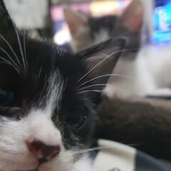 猫派/にゃんこ同好会 (2枚目)