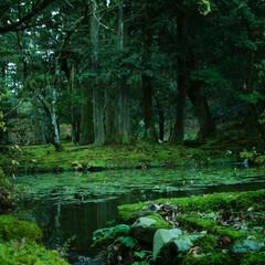 ジブリ/緑/寺/小松市/石川県/みんなにおすすめ 石川県小松市にある那谷寺。 夏や春は緑が…