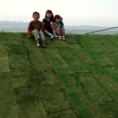草屋根 みらいのいえ 草屋根  竣工直後草屋根養…