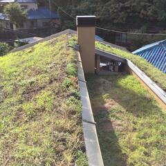 草屋根/土壁の家 みらいのいえ 草屋根  この住まいの草屋…