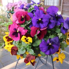 花/フラワーフォト/花フォト/ハンギングバスケット/フォト/写真/... 小ぶりの花などを使って、アレンジするハン…