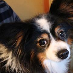 ペット/犬/動物/アニマル/ドッグ/フォト/... 実家では、犬を飼っています。2006年9…