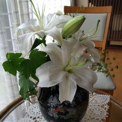 flowers/Flowerアレンジメント/Flower/フラワーインテリア/フラワーアレジメント/フラワーアレンジ/... 我が家では、生花をエントランスに飾ってい…