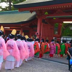 神社 大祓/みんなにおすすめ この季節、色んな神社で大祓儀式に参加する…